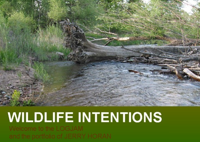 Wildlife Intentions